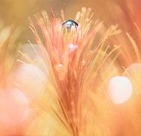 ロターラワリッキー(水草)の光合成 02131010011| 写真素材・ストックフォト・画像・イラスト素材|アマナイメージズ