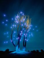 夜光虫(イメージ)  魚沼 新潟県