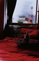ウサギのいる部屋