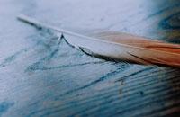 フラミンゴの羽