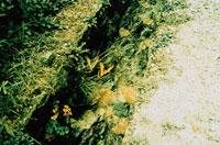 小川で遊ぶ蝶々