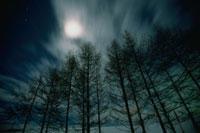 カラマツ林と月  美瑛 北海道