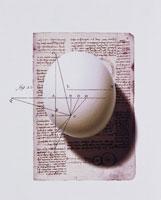 ダチョウの卵とメモと図式