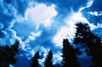 森林と雲り空 アイダホ州 アメリカ