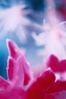 ぼやけた植物 02188000121| 写真素材・ストックフォト・画像・イラスト素材|アマナイメージズ