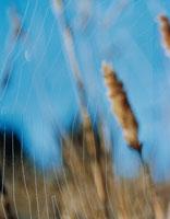 蜘蛛の巣 02188000213| 写真素材・ストックフォト・画像・イラスト素材|アマナイメージズ