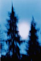 木のシルエットと月 オリンピック国立公園 ワシントン