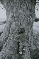 モントレーイトスギに登る子供 カリフォルニア アメリカ