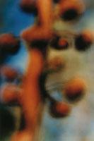 腐生植物 02188000394| 写真素材・ストックフォト・画像・イラスト素材|アマナイメージズ
