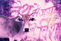 牛 02188000399  写真素材・ストックフォト・画像・イラスト素材 アマナイメージズ