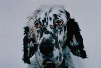 メガネをかけた犬 02197010000| 写真素材・ストックフォト・画像・イラスト素材|アマナイメージズ