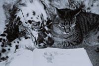 絵本を見る猫とメガネをかけた犬 B/W
