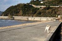 海沿いの歩道にいる白い子犬