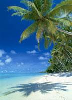 浜辺に続くヤシの木