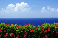 ハイビスカスと青い海と空
