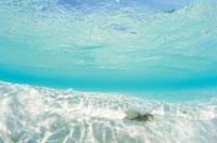 海底のヤドカリ