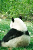 パンダの後姿