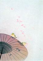 春・桜花びらをくわえるウグイスと和傘