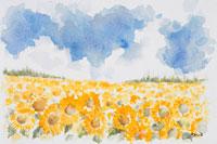 夏のスペインで入道雲と向日葵の花畑の風景
