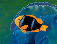 青いサンゴとアネモネフィッシュ