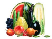 夏の野菜果物