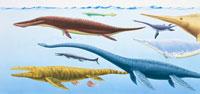 スーパーリアル 魚竜類 集団