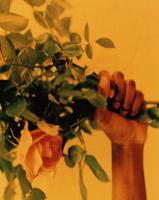 バラの束を持つ手