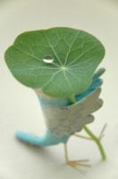 雨上がりのセキセイインコ  クラフト 02240000018| 写真素材・ストックフォト・画像・イラスト素材|アマナイメージズ