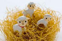 わらの上の子羊 02240000081| 写真素材・ストックフォト・画像・イラスト素材|アマナイメージズ