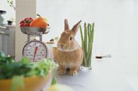 キッチンのウサギ