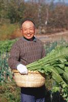 野菜の収穫をするシニア男性 02253005382| 写真素材・ストックフォト・画像・イラスト素材|アマナイメージズ