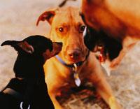 3匹の犬 02262000018| 写真素材・ストックフォト・画像・イラスト素材|アマナイメージズ