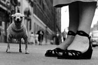 サンダルの足とチワワ       ニューヨーク 1946 02265000091| 写真素材・ストックフォト・画像・イラスト素材|アマナイメージズ