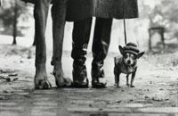 ブーツの足とチワワ     ニューヨーク 1974