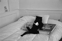 ベッドで本を読む猫  フランス 1985