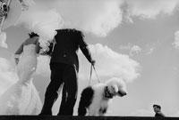 シルエットと犬 02265001324  写真素材・ストックフォト・画像・イラスト素材 アマナイメージズ