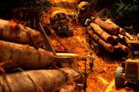 木材を運ぶトラックと作業員 1997年 マレーシア