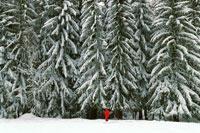 モミの木の雪景色 1999年 フランス 02265005381| 写真素材・ストックフォト・画像・イラスト素材|アマナイメージズ