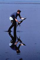 湾岸戦争余波の1羽の鳥を助ける男性 クウェート 1991年