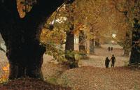 紅葉の並木道を歩くカップル カシミール 1999年 02265007873| 写真素材・ストックフォト・画像・イラスト素材|アマナイメージズ
