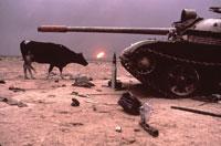 1頭のウシと戦車 クウェート 1991年