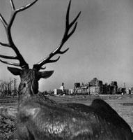 旧帝国議会公園の彫像 ベルリン ドイツ 1946年