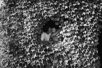 ツタの穴で寄り添うカップル 1993年 フランス 02265012109  写真素材・ストックフォト・画像・イラスト素材 アマナイメージズ