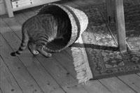 かごに頭を突っ込む猫 2001年 フランス