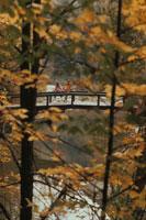 橋にもたれて紅葉を眺めるカップル 02265013378| 写真素材・ストックフォト・画像・イラスト素材|アマナイメージズ