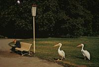 ベンチに座る中高年男性と鳥 ブリュッセル