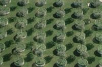 ロサンジェルス広場に並ぶ木と影 ロサンジェルス アメリカ