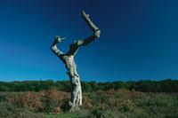 青空と草原に立つ1本の枯れ木 ハンプシャー イギリス 02265014562| 写真素材・ストックフォト・画像・イラスト素材|アマナイメージズ