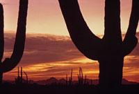 サボテンのシルエットと雲(オレンジ色) 02265015179| 写真素材・ストックフォト・画像・イラスト素材|アマナイメージズ