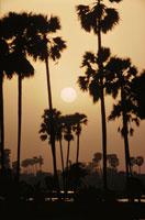太陽と椰子の木のシルエット(オレンジ色) インド 02265015182| 写真素材・ストックフォト・画像・イラスト素材|アマナイメージズ